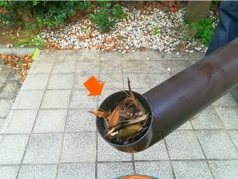 落ち葉やゴミが溜まった切断部
