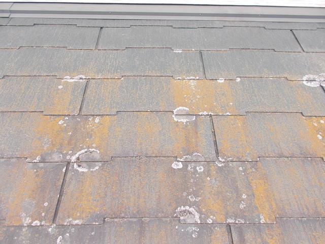 スレート屋根の苔カビ藻