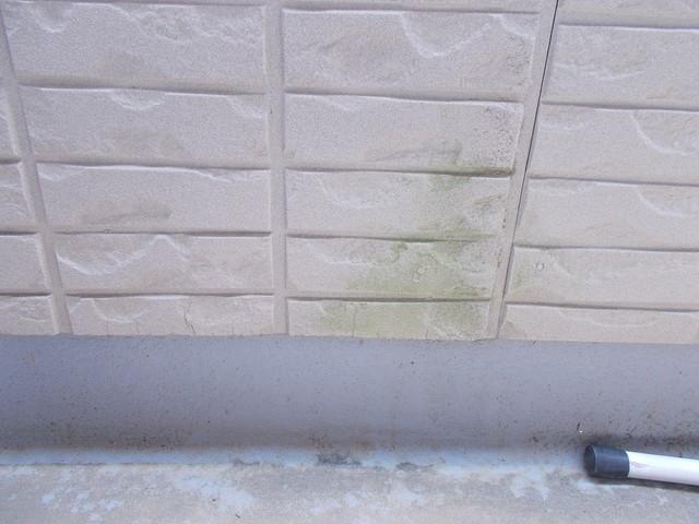 外壁の苔洗浄