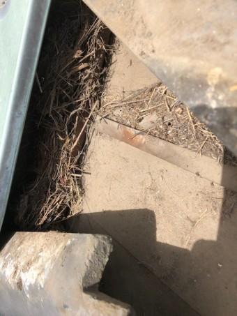 瓦屋根鳥の巣清掃
