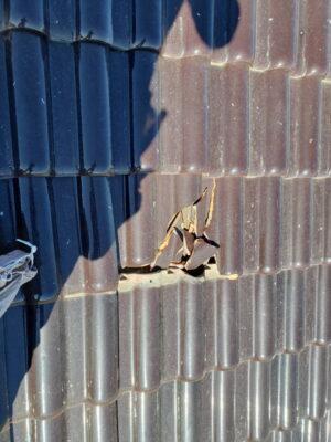 群馬県高崎市で台風被害による瓦の破損が発生しましたので屋根修理をしてきました。